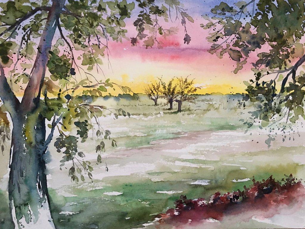 Bärenklau Sonnenuntergang über den Wiesen